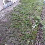 brick patio green
